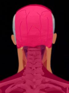 肩こりに関連する頚椎と頚部の筋肉群|住吉区長居藤田鍼灸整骨院