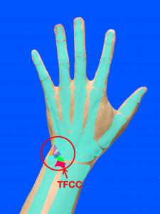 TFCC(三角繊維軟骨複合体損傷)の位置|大阪市住吉区長居藤田鍼灸整骨院