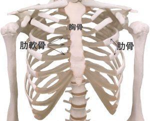 肋軟骨炎(肋骨、肋軟骨、胸骨)|住吉区長居藤田鍼灸整骨院