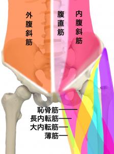 恥骨炎ー恥骨に付着する腹部の筋肉と大腿部の筋肉|大阪市住吉区長居藤田鍼灸整骨院