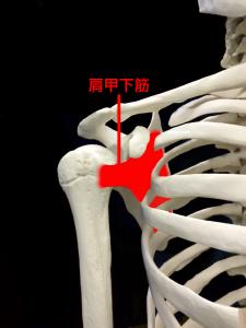 肩関節不安定症―肩関節を安定させる筋肉と腱