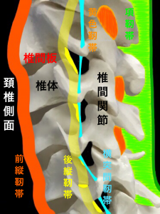 頚部椎間板、椎間関節、靭帯|大阪市住吉区長居藤田鍼灸整骨院