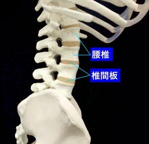 変形性腰椎症ー腰椎側面(腰椎と椎間板)|大阪市住吉区長居藤田鍼灸整骨院