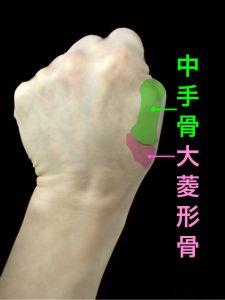 中手骨と大菱形骨で構成されるCM関節の位置|大阪市住吉区長居藤田鍼灸整骨院