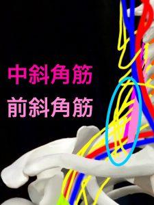 胸郭出口斜角筋症候群|大阪市住吉区長居藤田鍼灸整骨院