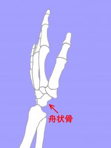 舟状骨骨折-手の舟状骨|大阪市住吉区長居藤田鍼灸整骨院