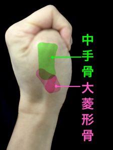 中手骨と大菱形骨で構成されるCM関節の位置|藤田鍼灸整骨院