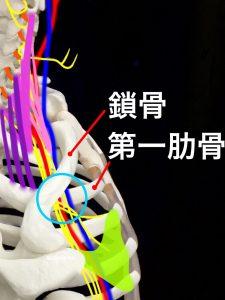 胸郭出口斜角筋症候|大阪市住吉区長居藤田鍼灸整骨院