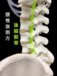後縦靭帯|大阪市住吉区長居藤田鍼灸整骨院
