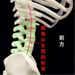 腰椎の生理的前弯|住吉区長居藤田鍼灸整骨院