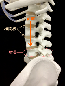 腰椎椎間板の腰椎を守るクッションの役割|住吉区長居藤田鍼灸整骨院