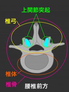 腰椎椎骨の椎体部分と椎弓部分|大阪市住吉区長居藤田鍼灸整骨院