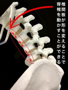 椎間板はその形を変えて脊椎に可動性を持たせる|大阪市住吉区長居藤田鍼灸整骨院