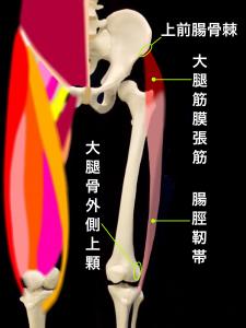 大腿筋膜張筋と腸脛靭帯|大阪市住吉区長居藤田鍼灸整骨院