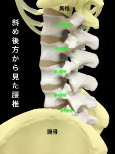 腰椎|大阪市住吉区藤田鍼灸整骨院