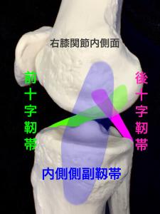 右膝の十字靭帯と側副靱帯、その他の靭帯|住吉区長居藤田鍼灸整骨院