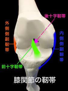 膝の前十字靭帯・後十字靭帯・内側側副靱帯・外側側副靱帯|大阪市住吉区長居藤田鍼灸整骨院
