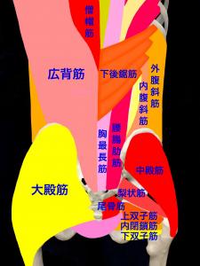 筋筋膜性腰痛|腰部の筋肉|大阪市住吉区長居藤田鍼灸整骨院