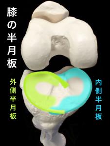 膝関節内側半月板と外側半月板|大阪市住吉区長居藤田鍼灸整骨院