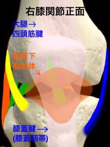 膝蓋下脂肪体炎・フォッファ―病|住吉区長居藤田鍼灸整骨院