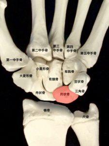 キーンベック病ー月状骨と手関節周囲の骨|住吉区長居藤田鍼灸整骨院