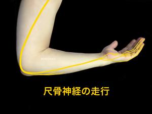 尺骨神経の走行|住吉区長居藤田鍼灸整骨院