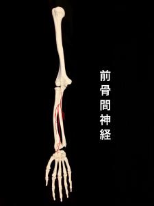 前骨間神経①