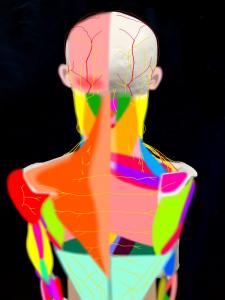 頚肩腕症候群・肩こりに関連する筋肉や神経、血管|大阪市住吉区長居藤田鍼灸整骨院