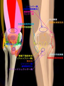 膝関節スポーツ障害・外傷で確認できる圧痛部位|大阪市住吉区長居藤田鍼灸整骨院