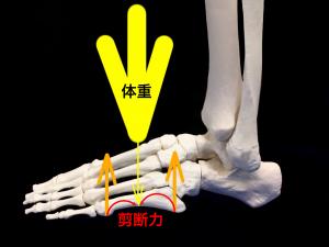 ジョーンズ骨折―中足骨の形状によりかかる剪断力|住吉区長居藤田鍼灸整骨院