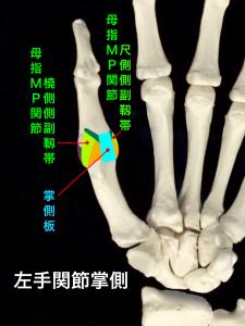 母指MP関節尺側側副靭帯損傷、スキーヤーズサム、ステナーリージョン―母指MP関節の靭帯|大阪市住吉区長居藤田鍼灸整骨院