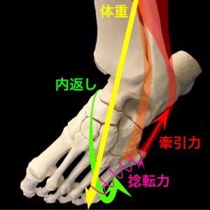 第五中足骨基底部骨折(下駄履き骨折)|住吉区長居藤田鍼灸整骨院