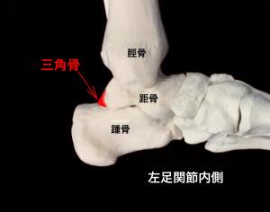 三角骨の癒合|大阪市住吉区長居藤田鍼灸整骨院