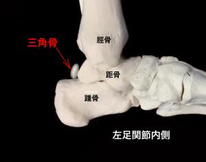 有痛性三角骨(三角骨障害)―三角骨の位置|大阪市住吉区長居藤田鍼灸整骨院