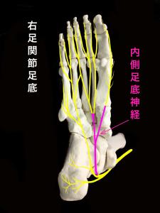 ジョガーズフット―内側足底神経|住吉区長居藤田鍼灸整骨院