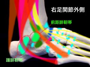 足関節不安定症ー足関節外足の支持組織|大阪市住吉区藤田鍼灸整骨院