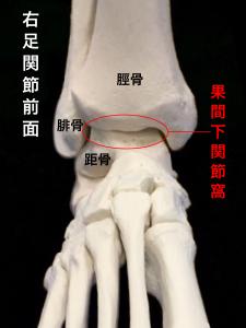 足関節不安定症ー足関節の構成|住吉区長居藤田鍼灸整骨院