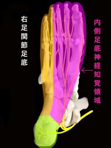 ジョガーズフット―内側足底神経が支配する知覚領域|大阪市住吉区長居藤田鍼灸整骨院