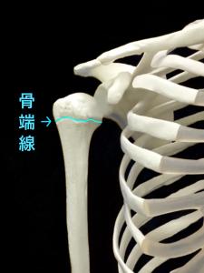 リトルリーガーズショルダー|骨端線|住吉区長居藤田鍼灸整骨院