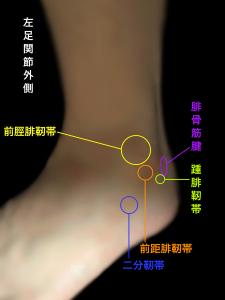 脛腓靭帯損傷ー前脛腓靭帯と周囲の靭帯|大阪市住吉区長居藤田鍼灸整骨院