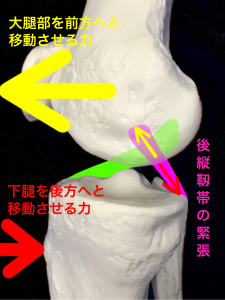 後縦靭帯損傷―後縦靭帯は大腿骨に対して脛骨が後方にずれる動きを防いでいる|大阪市住吉区長居藤田鍼灸整骨院