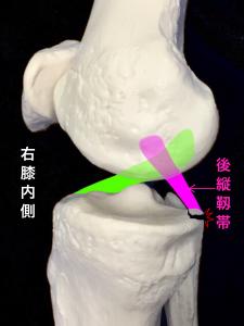 後縦靭帯付着部剥離骨折のイメージ|大阪市住吉区長居藤田鍼灸整骨院