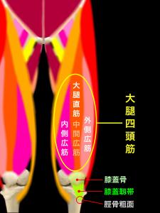 ジャンパー膝(膝蓋靭帯炎) 大腿四頭筋と膝蓋靭帯|大阪市住吉区長居藤田鍼灸整骨院