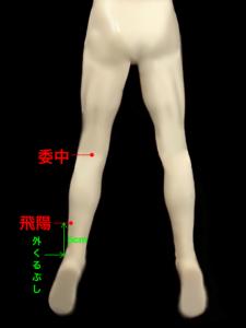 首のこり、首の痛みのツボ(委中、飛陽)|住吉区長居西藤田鍼灸整骨院