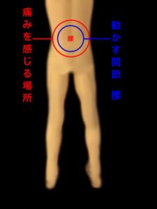 腰の運動と痛みを感じる場所|住吉区長居西藤田鍼灸整骨院
