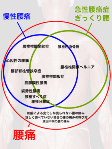 腰痛の種類と分類|大阪市住吉区長居西藤田鍼灸整骨院